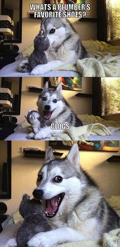 The Best Worst Jokes From Pun Husky - Mandatory