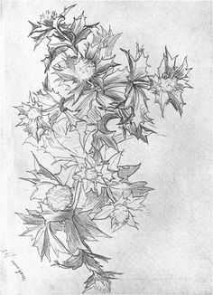Frederic Leighton, STUDY OF SEA THISTLE. Malinmore, Ireland, 1895 From Sketch-book