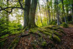 -- Green Forest -- - Contact: petrkubat@seznam.cz www.facebook.com/fotopetrkubat Facebook, Green, Nature, Plants, Naturaleza, Planters, Nature Illustration, Outdoors, Plant