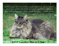 Regal Maine Coon cat  photo greeting card by Inspirelings on Etsy, $2.95