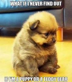 My heart just melted for this little guy <3