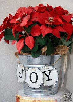 12. #décembre – Poinsettia - #Janvier à décembre : 12 mois de fleurs de…