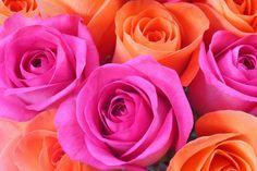 Pink and orange roses Orange Flowers, Orange Color, Orange Pink, Colorful Flowers, Good Color Combinations, Color Combos, Rose Arrangements, Birth Flowers, Pink Bouquet