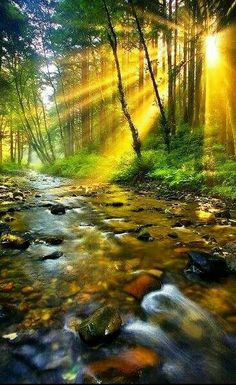 SEASONAL – SUMMER – sun rays peak through the forest that surrounds the rocky river in oregon, photo via secrets. Beautiful World, Beautiful Places, Beautiful Pictures, Beautiful Forest, All Nature, Amazing Nature, Nature Water, Landscape Photography, Nature Photography