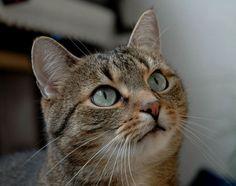 Kočka - klikněte pro zobrazení detailu