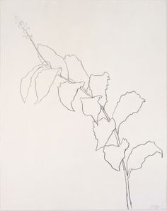 """Ellsworth Kelly Plant Drawings"" 