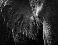 black and white photographed ugly animals | ... Wildlife Photography and the Need for Black and White | Chobe Safari