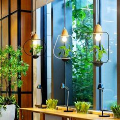 Zox - Modern Nordic Iron Pendant Planter Lamp Transform any space with these stunning modern Nordic iron frame pendant planter lamps! Made from premium iron. Chandelier For Sale, Modern Planters, Concrete Planters, Hanging Plants, Modern Interior Design, Modern Decor, Plant Decor, Hanging Lights, Modern Lighting