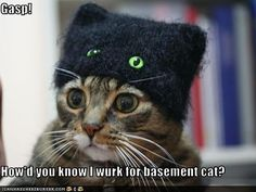 funny-pictures-cat-works-for-basement-cat.jpg (500×375)