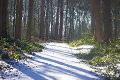 Lickey Hills under snow