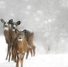 Image de winter, snow, and deer Beautiful Creatures, Animals Beautiful, Cute Animals, Tier Fotos, Mundo Animal, All Gods Creatures, Nature Animals, Winter Scenes, Winter Time