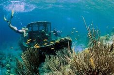 I've snorkeled the tugboat. You never now what you find with snorkeling Curacao