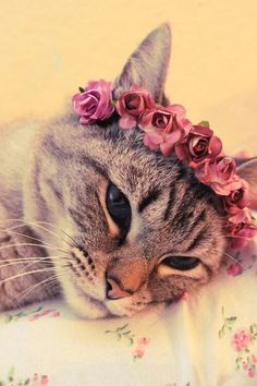 Cat with flower