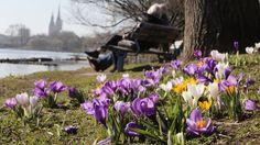 Draußen Eis schlecken und die Sonne genießen: Der Duft von Frühling liegt in der Luft – aber es gibt auch eine schlechte Nachricht.