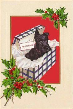 Scottie dog for Christmas. Scottish terrier Christmas Note, Christmas Pictures, Christmas Greetings, Christmas Ideas, Christmas Crafts, Vintage Christmas Ornaments, Retro Christmas, Vintage Holiday, Scottish Terrier Puppy