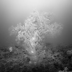 Softcorals, photography by Hengki Koentjoro