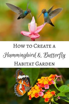 Create a hummingbird and butterfly habitat garden that will have these winged creatures flying around your yard all summer long hummingbird flowers hummingbird garden. Hummingbird Flowers, Hummingbird Garden, Butterfly Flowers, Hummingbird Food, Butterfly Garden Plants, Hummingbird Habitat, Butterfly Bush, Butterfly Food, Butterfly Feeder