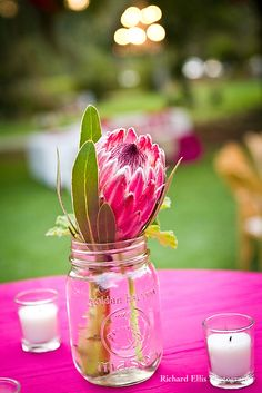 Singel proteas in glass vase. I love kind of protea