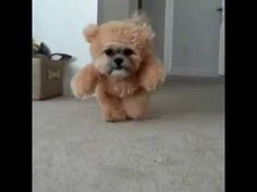 This Dog Dressed As A Teddy Bear Will Fill Your Heart With Delight