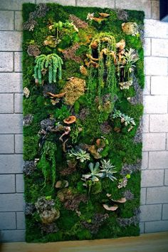 Vertical Garden with moss. Vertical Garden with moss.