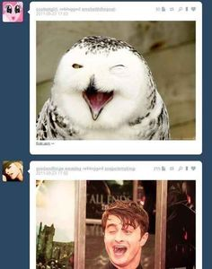 Do you guys know something I don't? The 34 Most Perfectly Timed Moments In Internet History Time Tumblr, Tumblr Funny, Harry Potter Jokes, Harry Potter Fandom, E Mc2, Daniel Radcliffe, Perfect Timing, Mischief Managed, Movies