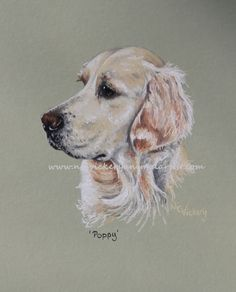 Poppy, a commission, given as a Mothers' Day present www.nicvickeryani... facebook.com/nicvickeryanimalartist nic.vicb@gmail.com