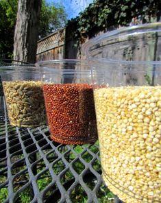 Science Fair: Bird Seed Science: Do Birds Prefer Certain Colors?