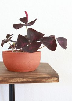 These days there are so many different kinds of pots for your plants. Plastic, ceramic, terracotta, and more! See 3 reasons to use terracotta for your plants. By Clever Bloom Bird Bath Garden, Glass Garden, House Plant Care, House Plants, Terra Cotta, Garden Whimsy, Garden Junk, Garden Sheds, Plant Crafts