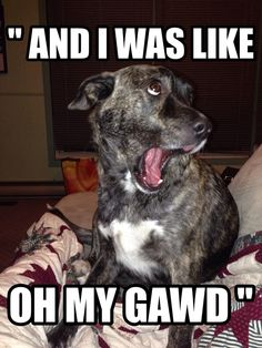 """And I was Like OH MY GAWD"" funny dog meme"
