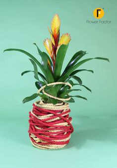 Summer, outside dining, party's or just relaxing in the garden. Here a nice, fun and easy idea to bring some extra color around you!   Check out how easy it is at http://www.flowerfactor.com/academy/tutorials/bromelia-group/
