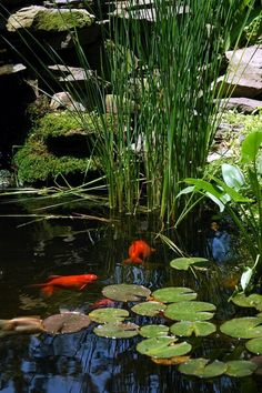 27 idéés pour le bassin de jardin préformé , hors sol + - petit-bassin-lac-préformé-plantes-petit