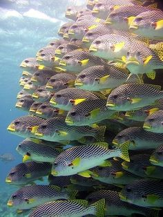 Great Barrier Reef. Note one unhappy looking guy staring at the photographer.