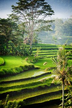 Sidemen, Bali by EdBob on Flickr.