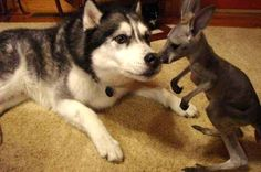 This lady meeting her BFF for the first time! | 18 Little Joeys Who Will Make Your Heart Smile