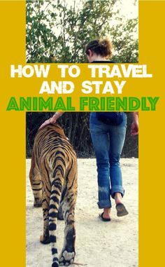 Swimming with dolphins or manta rays, whale watching, having a photo taken with a tiger – wildlife tourism and visiting animal attractions on holiday are proving increasingly popular. But how do you see remain animal friendly when you travel?