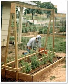 "Moveable trellis. Great idea! Maybe some removable dowel pins to ""lock"" it to the side of the bed so the wind won't blow it over in a summer storm."