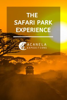 Many have seen photos or documentaries from Africa and can only imagine the extraordinary wild spectacle of the African Savannah: lions, rhinos, hippos, elephants, crocodiles, and giraffes. All the cast in one place, however, nowadays there are also several Safari Parks around the world.   #safariparks #acanelaexpeditions #adventuretravel #boutiquetravel #travel