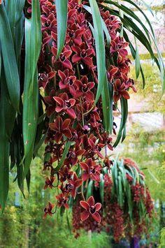 ✿ Магия Цветов - Magic Flower ✿– Сообщество– Google+