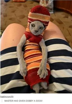 Master has given dobby a sock!   Hilarious!!