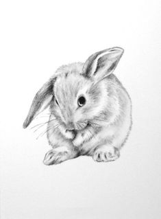 Supreme Portrait Drawing with Charcoal Ideas. Prodigious Portrait Drawing with Charcoal Ideas. Bunny Sketches, Animal Sketches, Animal Drawings, Art Sketches, Pencil Drawings, Charcoal Drawings, Bunny Tattoos, Rabbit Tattoos, Rabbit Drawing