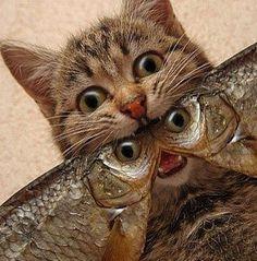 Кот васька плут...