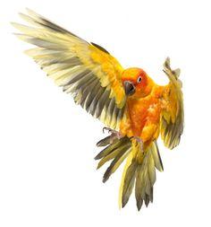 Parrot by Andrew Zuckerman