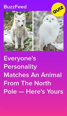 Everyone's Personality Matches An Animal From The North Pole — Here's Yours Dog Quizzes, Quizzes Funny, Quizzes For Fun, Random Quizzes, Buzzfeed Test, Quizzes Buzzfeed, What's My Spirit Animal, Dog Breed Quiz, North Pole Animals