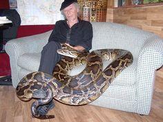 30year old burmese python