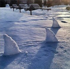 Totally making these in the yard our next snow fall!!!