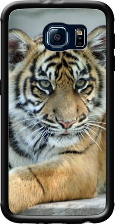 Tiger 001 By JAMFoto for Galaxy S6