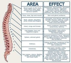 Acupuncture For Back Pain Nerve chart for the spine, for those who like to attempt a self diagnosis. Mental Problems, Eyes Problems, Nerve Problems, K Tape, Spinal Nerve, Spine Health, Spinal Cord Injury, Nerve Pain, Anatomy And Physiology