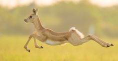 The jump.. by Hardik Patel on 500px