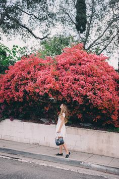 Gal Meets Glam A Rainbow of Bougainvillea - Red Valentino dress, kate spade New York loafers, and Celine bag