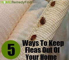 Fleas in your kitchen or living room are not only irritating but also very unhygienic. The most frustrating part is that even if you keep your house neat and Household Cleaning Tips, Cleaning Hacks, Rid Of Bed Bugs, Fleas, New Trends, Home Remedies, Need To Know, Herbalism, Health Care